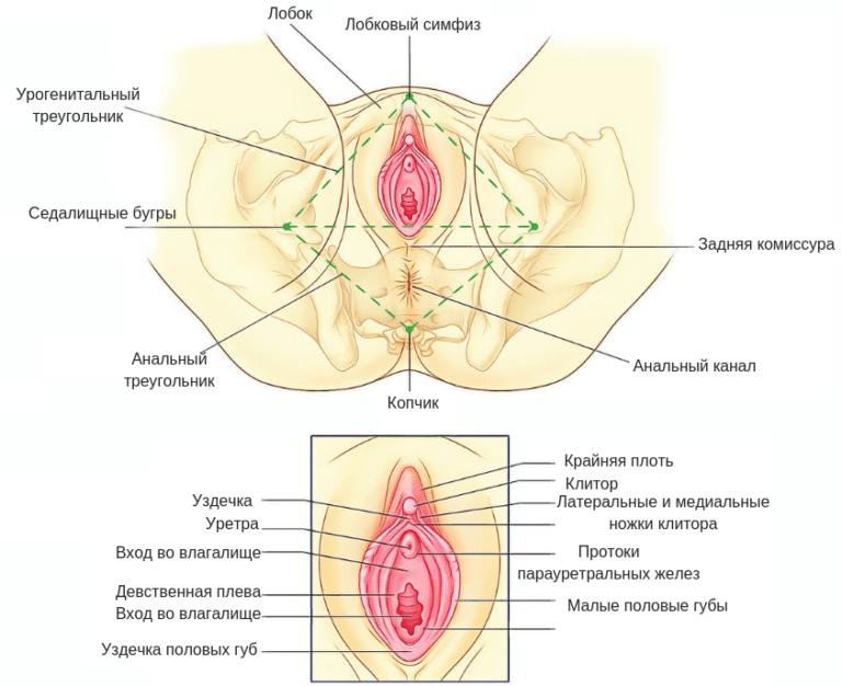 Kaip padidinti genitaliju organa vyrams pagal liaudies gynimo priemones
