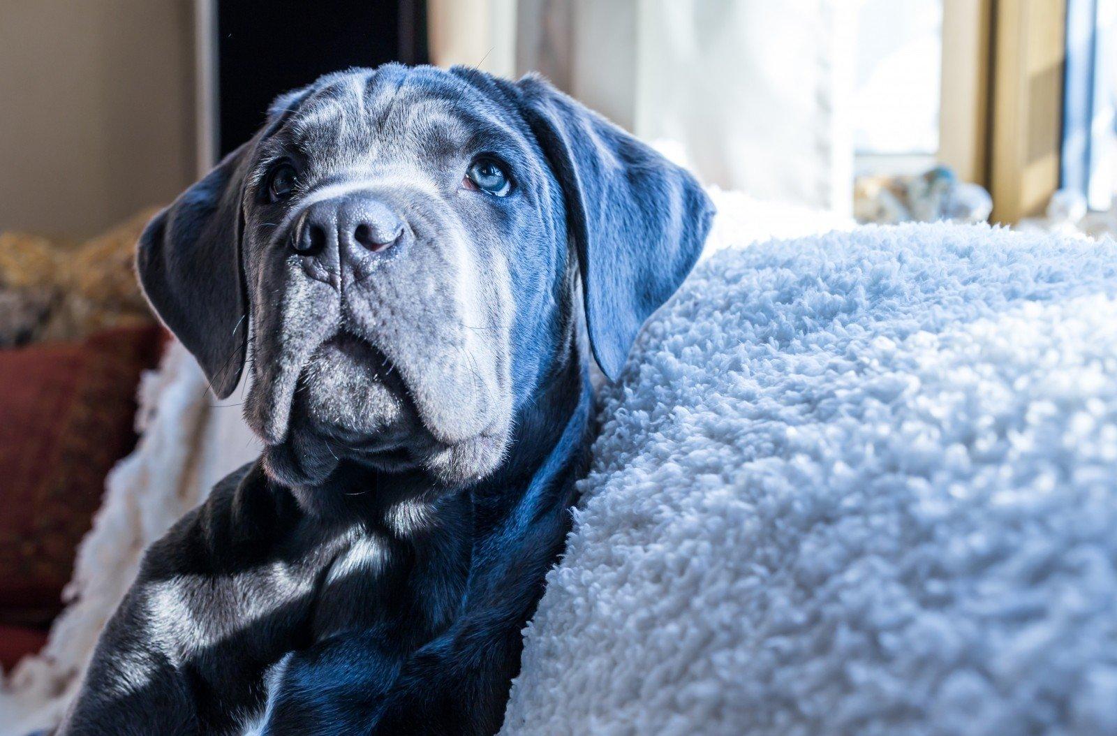 Kas yra suns nario dydis