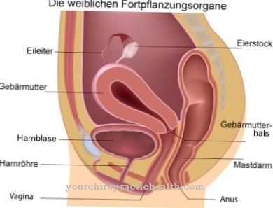 Lyties organu organu dydis, kaip padidinti dydi